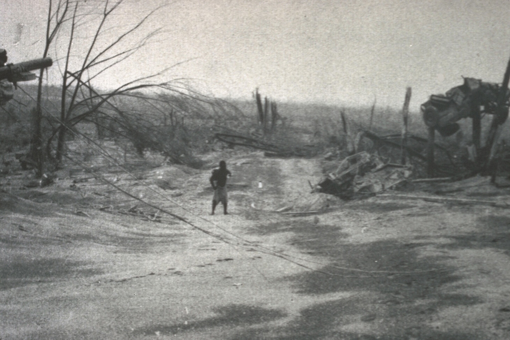 The vehicle to the right was suspended 3 m above the ground between the tops of two broken trees by the devastating pyroclastic surges of the 21 January 1951 eruption of Mount Lamington. The vehicle was located in the village of Higaturu, 10 km N of the volcano. Velocities of the pyroclastic surges were estimated to be in excess of 120 km per hour. The high-temperature surges destroyed the village, removing houses from their foundations and demolishing a steel-framed hospital building. Photo by Tony Taylor, 1951 (Australia Bureau of Mineral Resources).