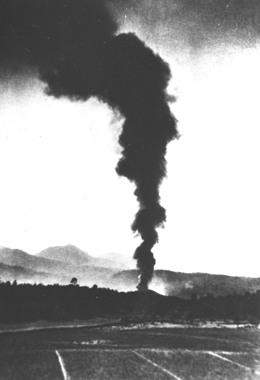 A dark ash plume, seen here from the NE, rises above the new volcano on February 21, 1943, the 2nd day of the eruption.  The new cone, seen just rising above the tree tops, is about 30 m high.  During this early stage the cone had the shape of a low dome, with slope angles of 32 degrees toward the west, but lesser angles to the east.  This indicates that the cone had already been breached and that lava had begun flowing to the east. Photo by Salvador Ceja, 1943 (U.S. National Archives, published in Luhr and Simkin, 1993).
