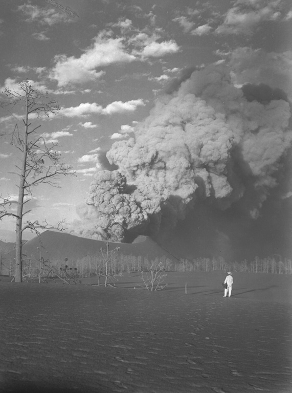 A geologist observes a thick ash plume rising above the crater of Parícutin on March 22, 1944, from Mesa de Cocjarao, 1 km SW.  The lowered south rim is due to scouring of the south crater vent by the eruption column.  During March 1944 the eruptive activity ranged from a weak explosive column accompanied by deep rumbling to large, but almost soundless cauliflower columns such as the one shown here. Photo by William Foshag, 1944 (Smithsonian Institution, published in Foshag and Gonzáles-Reyna, 1956).