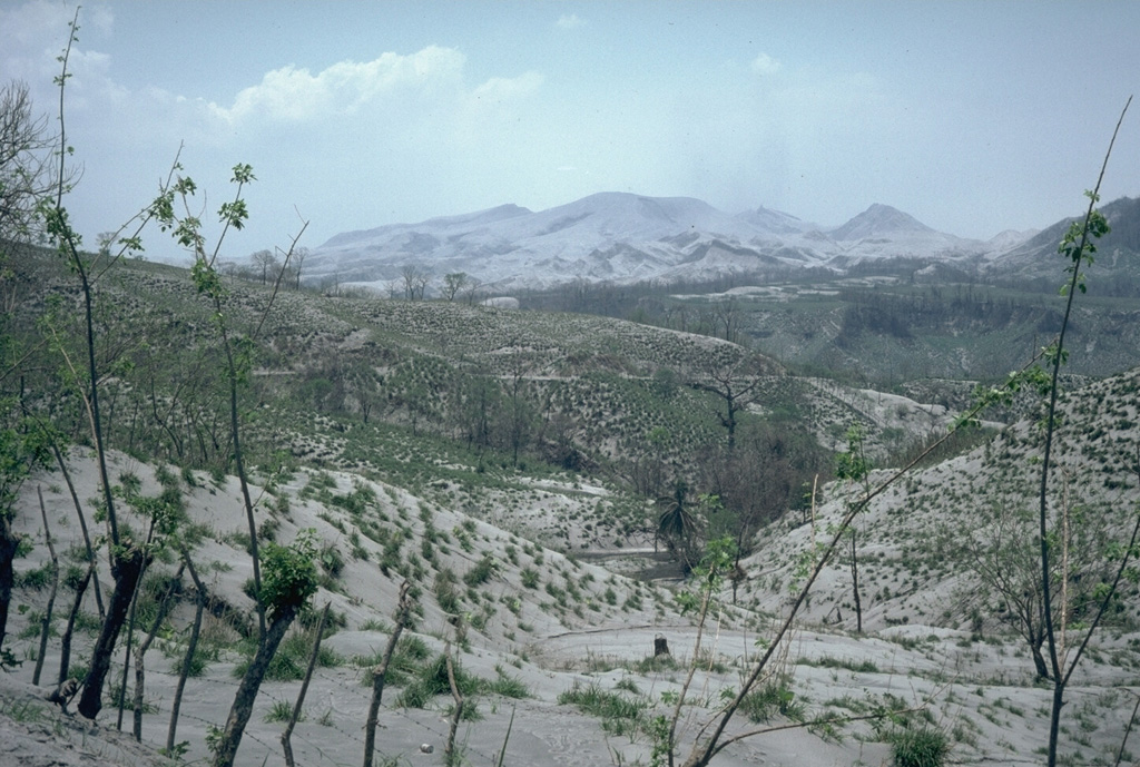 A deposit of ash blankets the countryside around El Chichón volcano, seen in the background, on April 19, 1982, about two weeks after a series of major eruptions.  Ash covered an area of more than 45,000 sq km in a ENE-trending lobe.  At this location, 12 km NE of El Chichón, the ashfall deposit was 30 cm thick.  Fine ash and sulfuric-acid droplets from the 1982 explosive eruptions of El Chichón circled the globe and were responsible for brilliant sunsets in the northern hemisphere for the next few years. Photo by Jim Luhr, 1982 (Smithsonian Institution).